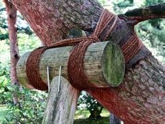 sostegno albero