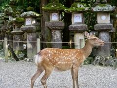 Kasuga-Shrine